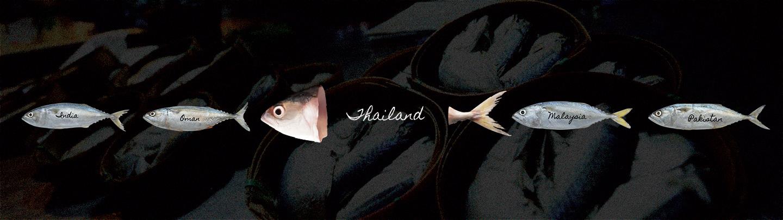 """""""ปลาทูไทย"""" รู้ไหมว่ากำลังจะหายไปจากโลก"""