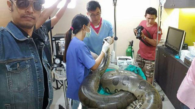 'เจ้าเขียว' งูอนาคอนด้าโผล่ปทุมตายแล้ว เลือดออกมาก ผ่าตัดเนื้องอก - thairath.co.th